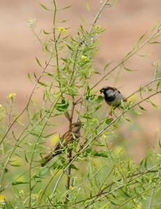 vogels in mosterdboom