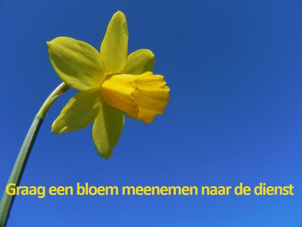 graag een bloem